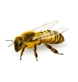 Wasp realistic isolated vector image