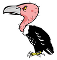 vulture vector image