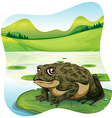 Green toad on water lily vector image
