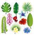 set of colorful tropical vector image