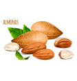 almonds whole and almond vector image