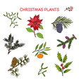 collection of winter plants christmas design vector image
