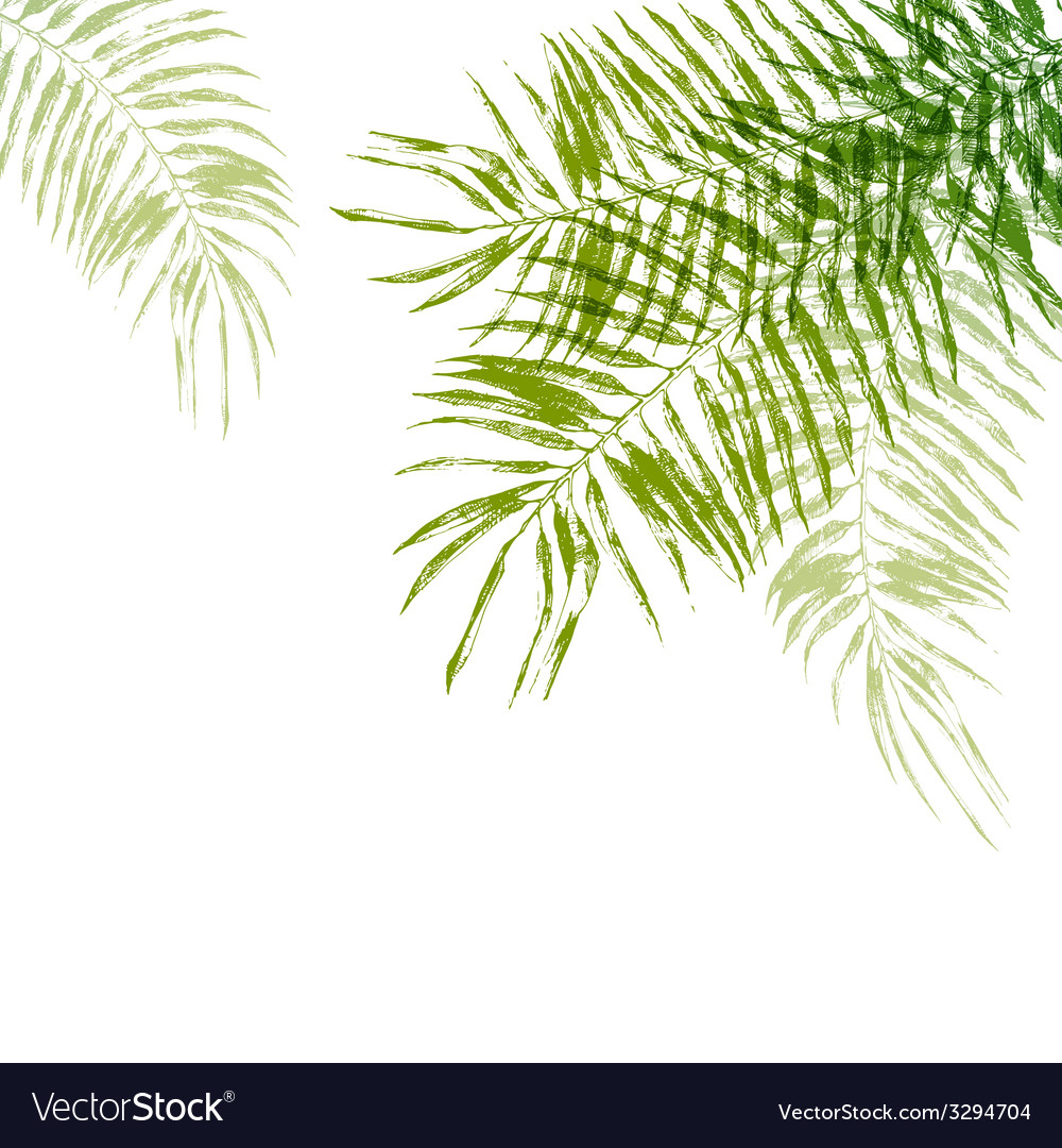 Hand drawn palm tree leaves vector