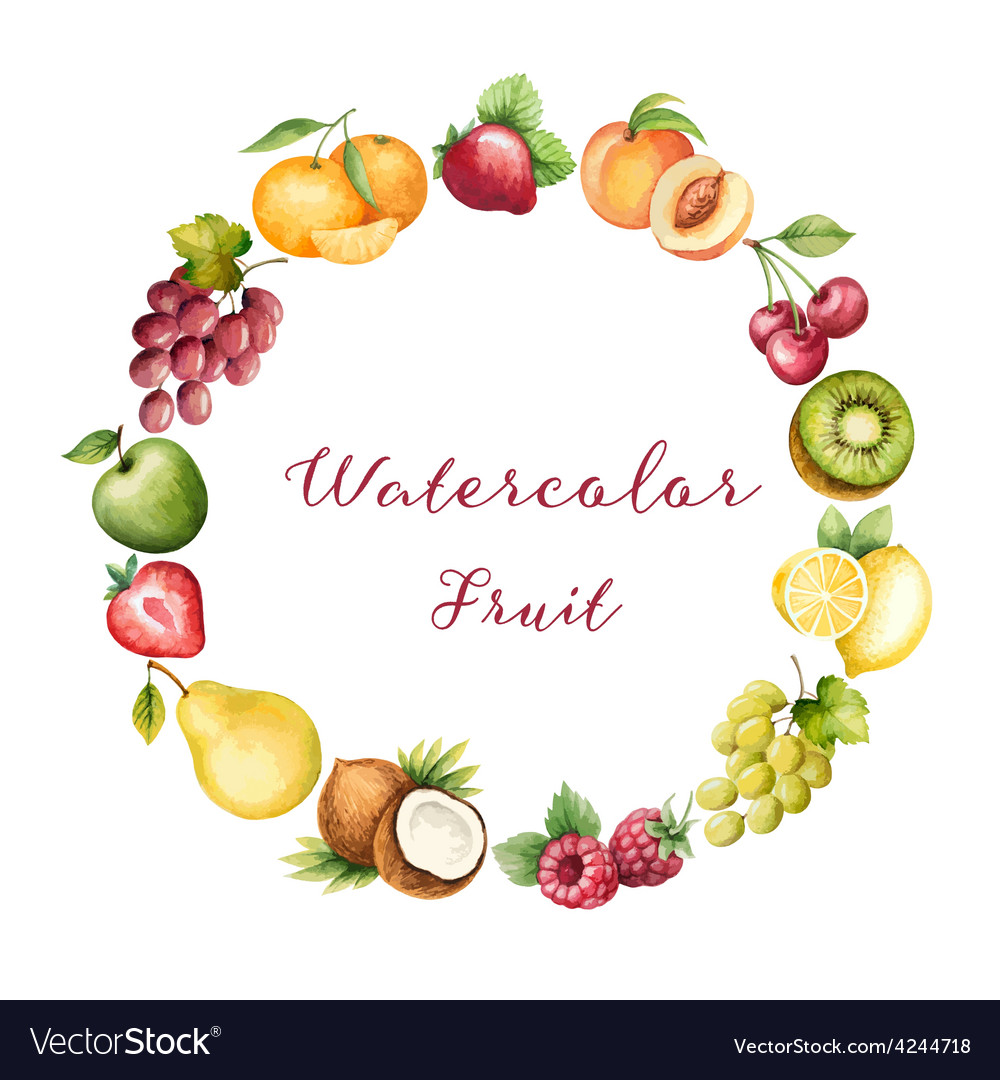 Watercolor fruit vector
