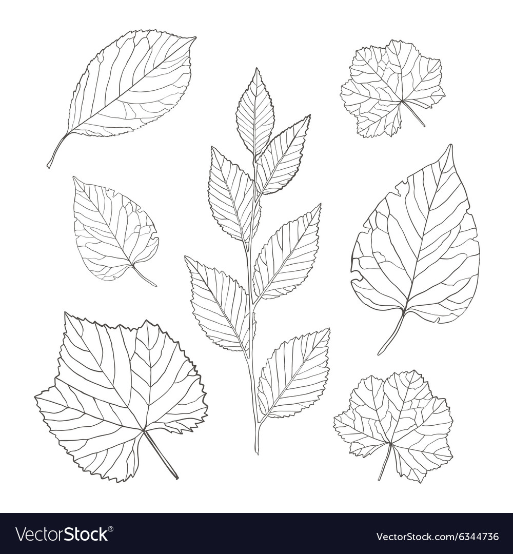 Outline leaves set vector