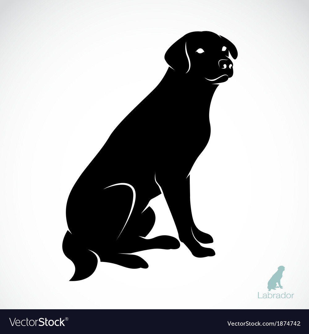 Dog labrador vector