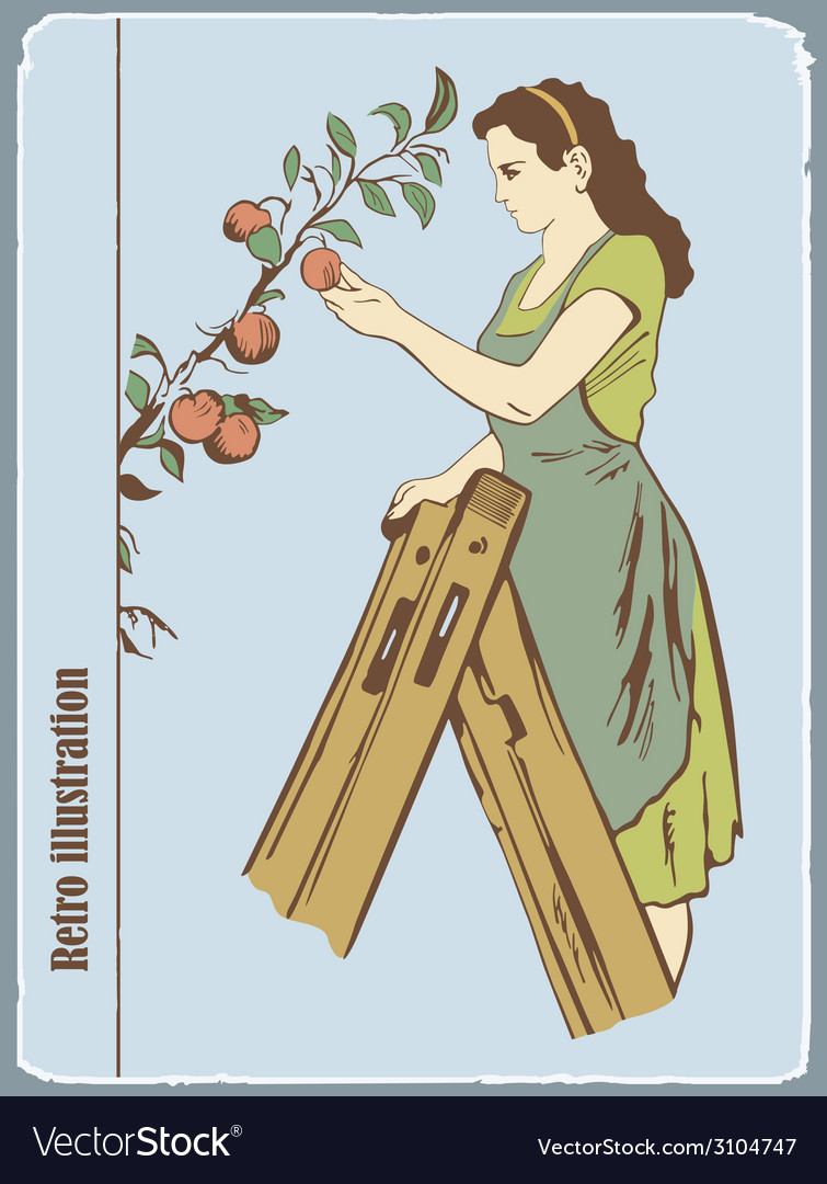 Woman gathers apples vector