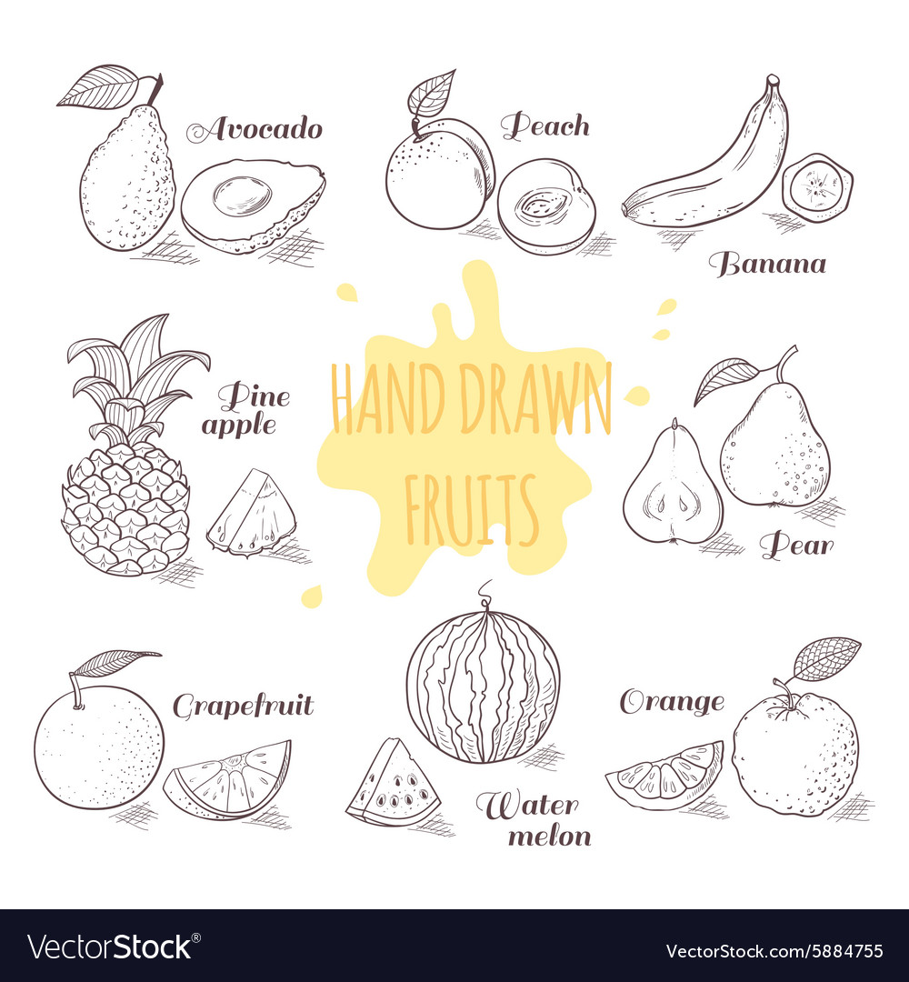 Set of hand drawn outline fruits with slice doodle vector