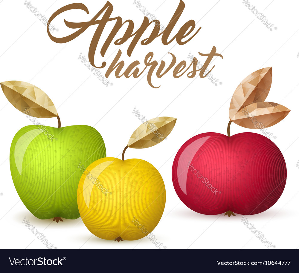 Three apples vector