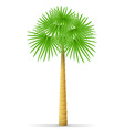 palm tree 10 vector image