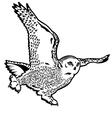 snow owl black white vector image