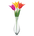 Bouquet of tulips in a glass vase vector image vector image