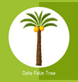 date palm tree of exotic tropical vector image