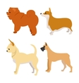 Set of purebred dogs vector image