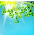 Beauty green leaves branches vector image