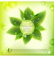 fresh green leaves background vector image vector image