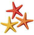 starfishes vector image