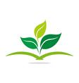 Logo pharmacy mashed drugs organic product icon ve vector image