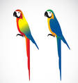 Parrot Macaws vector image