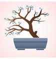 japan or china bonsai small tree in pot eps10 vector image
