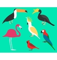 Set of flat birds isolated on background vector image