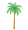 palm tree 12 vector image vector image