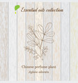 pure essential oil collection chinese perfume vector image