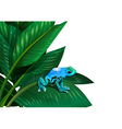 A frog above the leaf of a plant vector image