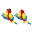 two parrot with colorful feather vector image