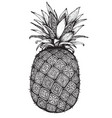 hand drawn graphic ornate pineapple fruit vector image