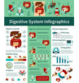 digestive system flat infographics vector image
