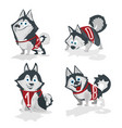 husky dog with numbers 2018 isolated on white vector image