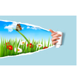 Summer background with flowers grass and a ladybug vector image