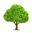Apple tree with apple vector image