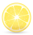 Sliced Lemon vector image