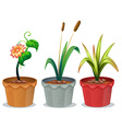 Potted Plants vector image vector image