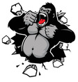 Angry gorilla breaking the wall vector image