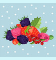 blackberries background card vector image