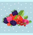 blackberries background card vector image