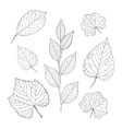 Outline leaves set vector image