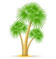 palm tree 13 vector image vector image