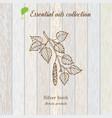 birch essential oil label aromatic plant vector image