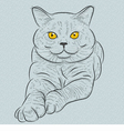 British blue cat with yellow eyes vector image vector image
