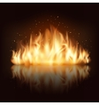 Burning fire flame vector image