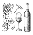 Grape branches bottle glass of wine vector image