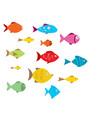 aquarium fishes vector image