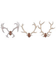set of different deer antlers vector image