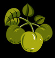Three green simple apples with leaves ripe sweet vector image
