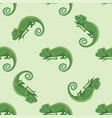 reptile chameleon amphibian seamless pattern vector image