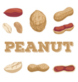 Peanut set vector image